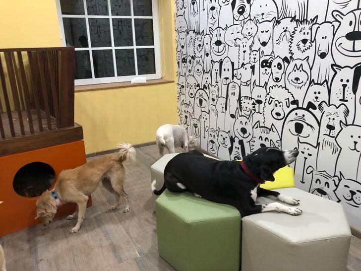 """""""kennel Bombay House Somaya Kalappa Architects Indiaartndesign"""""""